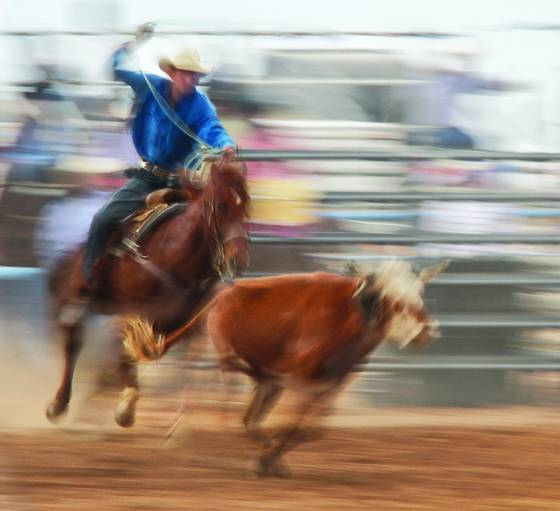 Rodeo impressions