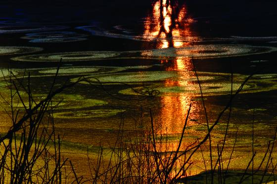 Bullough s pond