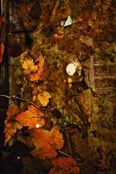 Leaves and debris
