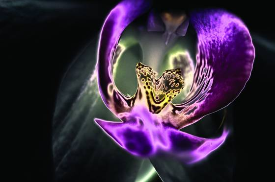 Solar orchid