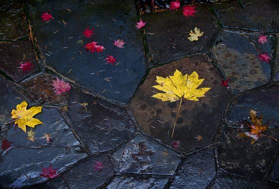 Leaves   stones