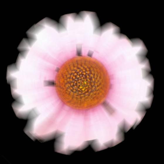 Daisy  5