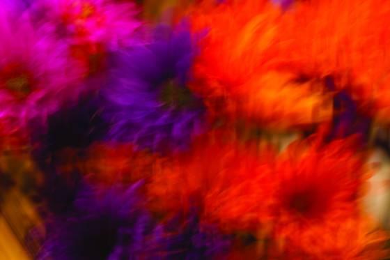 Oglebay fall flowers