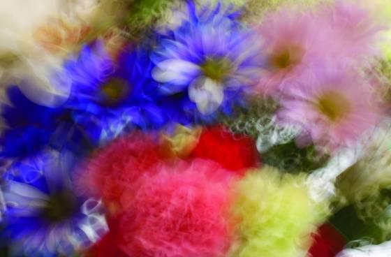 Oglebay spring flowers