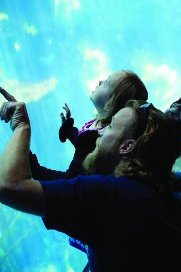 Aquarium wonders