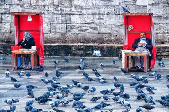 Plate sellers