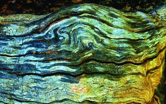 Old wood 3