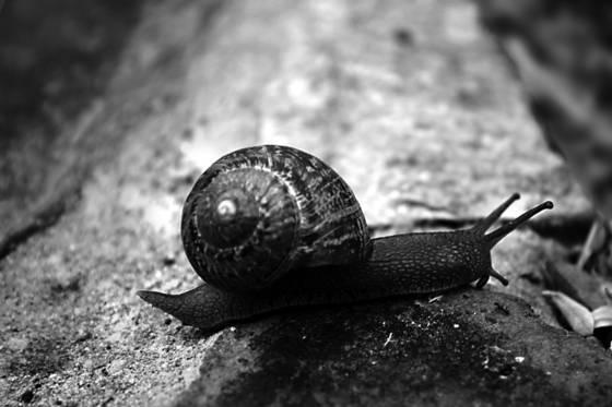 Snail 65