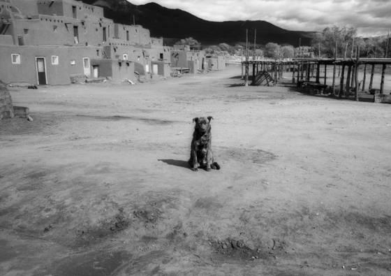 Dog at the pueblos