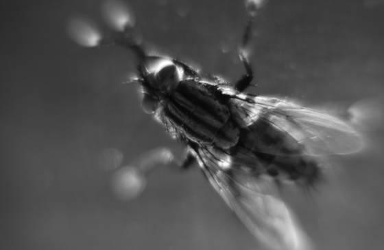 Crazy eyed fly