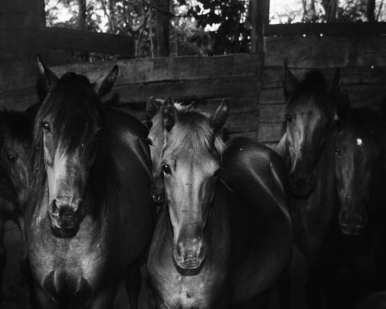 Equines 6