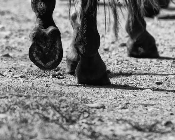 Equines 7