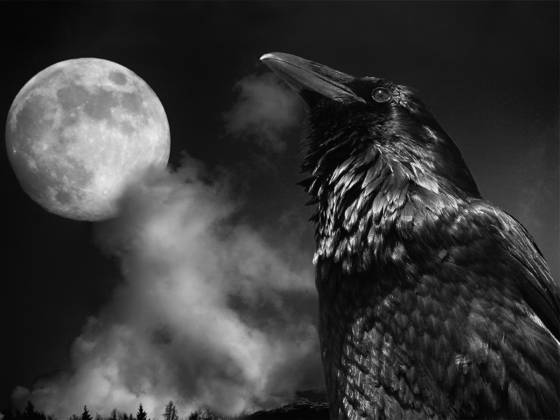 Raven   nightwatch