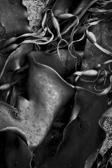 Seaweed 12