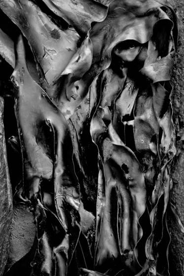 Seaweed 5