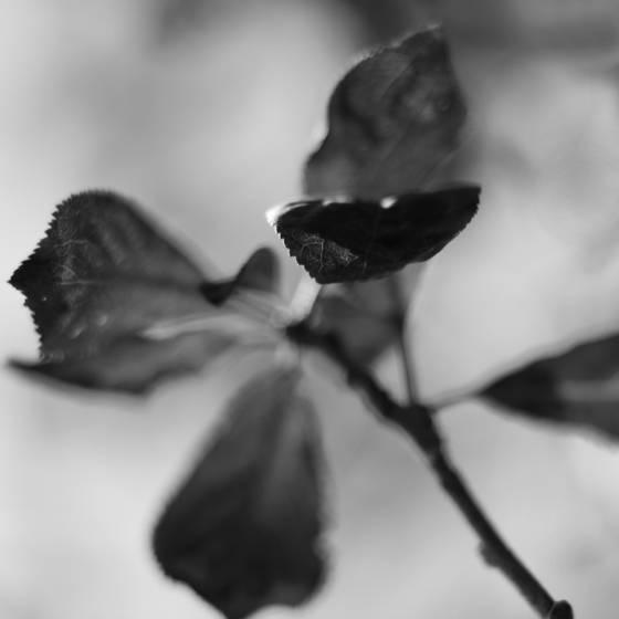 Botanic dance 7