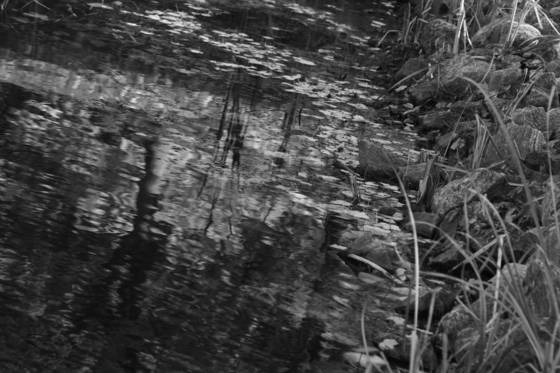 B and w pond
