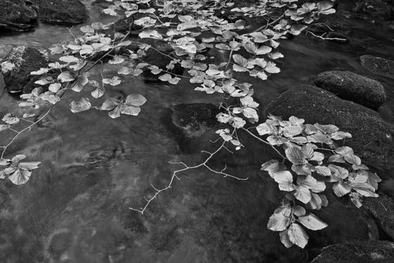 Leaves over water