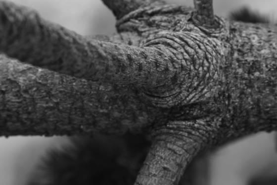 Elephant tree