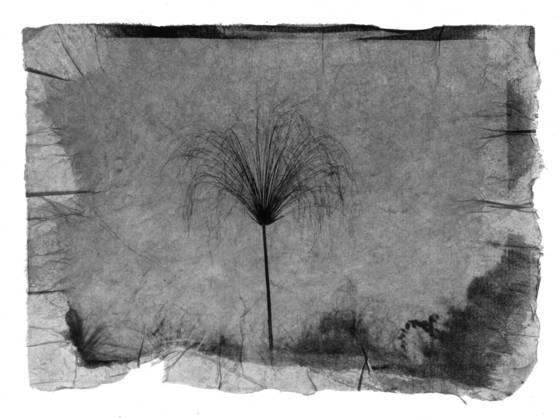 Papyrus 3