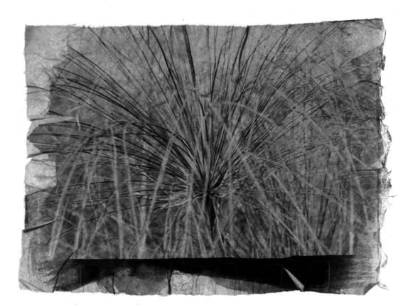 Papyrus 2