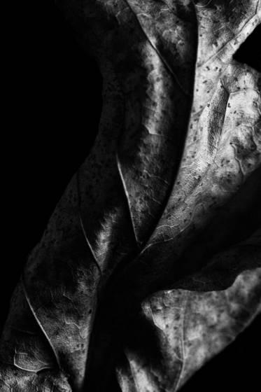 Leaf series 2194