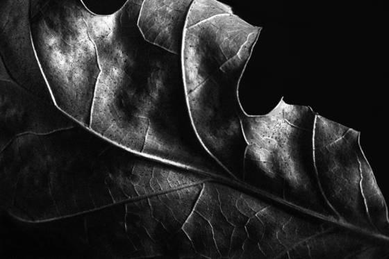 Leaf series 2204