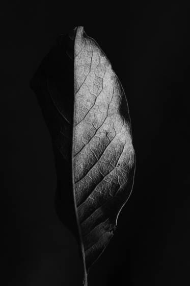 Leaf series 2317