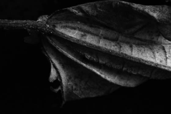 Leaf series 2747