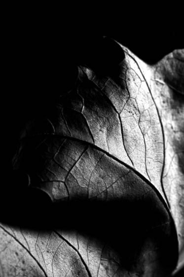 Leaf series 655 wonder lake