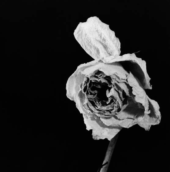 Errant petal