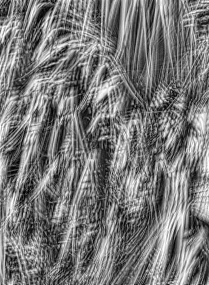 Windblown palms  5