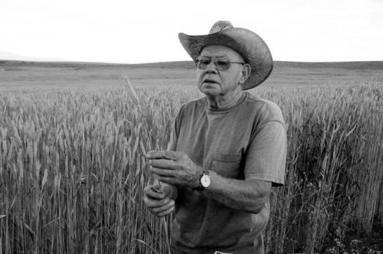 Wheat just fine