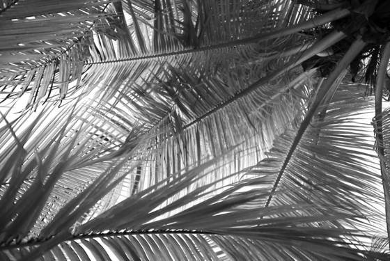 Fronds 2