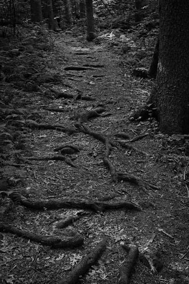 The path upon which i stumble