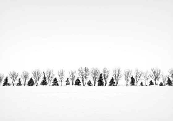 Alternating trees