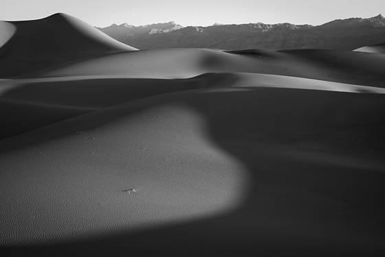 Dune study 10