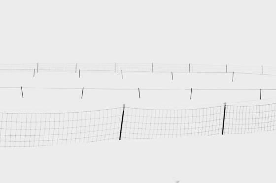4 fenceline