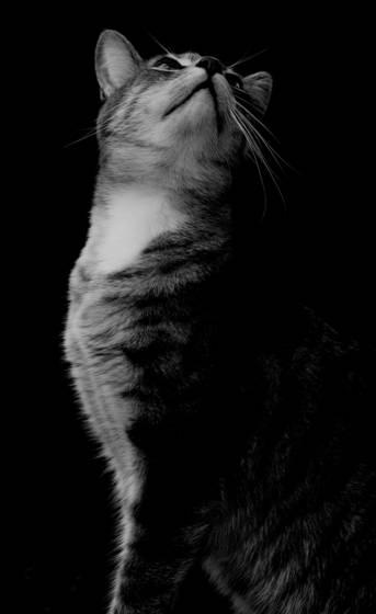 Feline diva