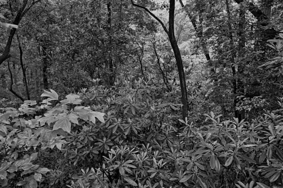 Forrest edge