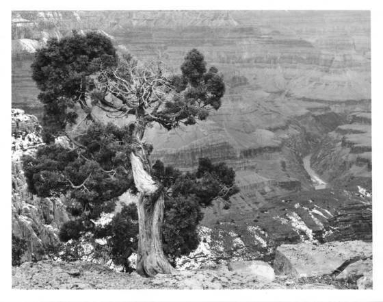 Rim tree