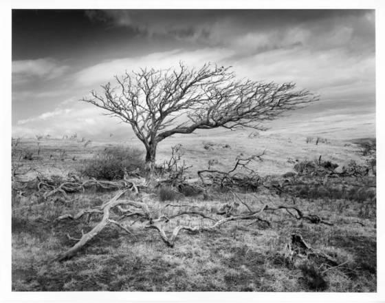 Tree ossuary
