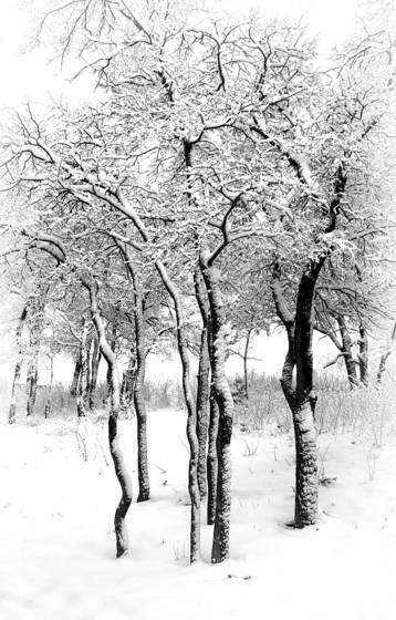 Texas winter