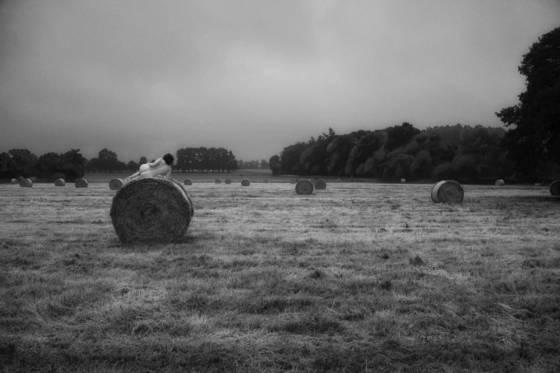 42 bales of hay