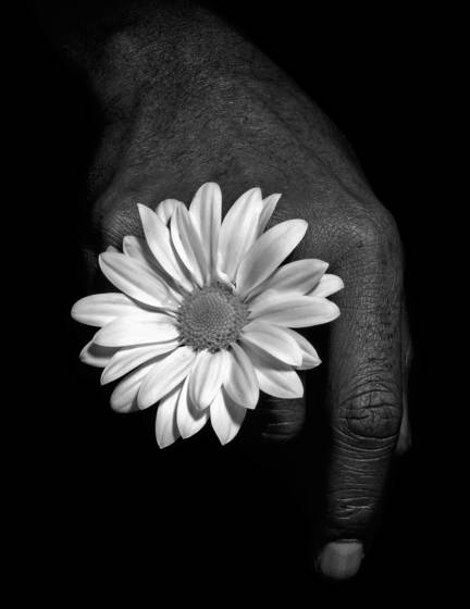 Bruce s hand with flower  3