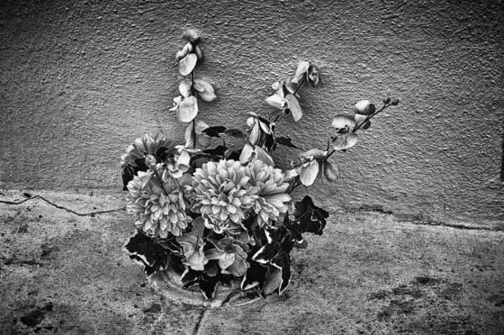Grave flowers 1