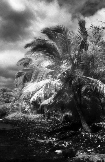 La perouse bay in infrared  1