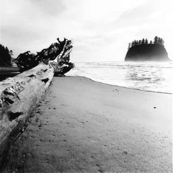 Log   sea stack