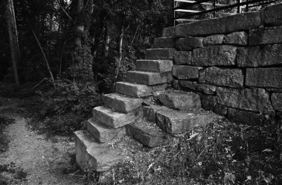 Steps in the forest