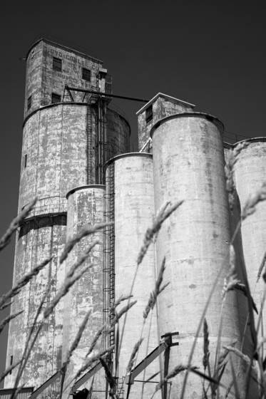 Cashup grain elevator 2